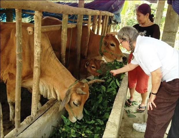 Provincia central vietnamita ayuda a victimas del Agente Naranja/Dioxina hinh anh 1