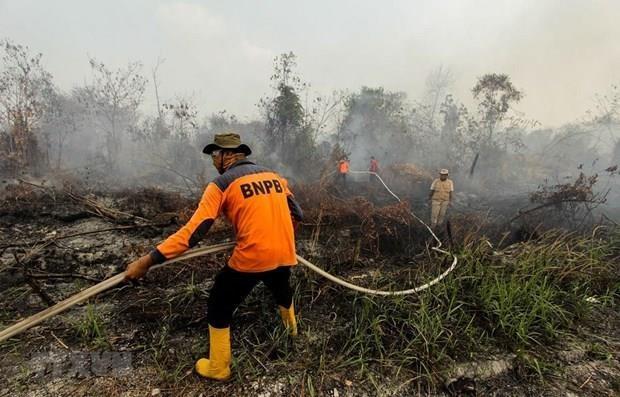 Suspenden varias escuelas en Indonesia actividades por humo de incendios forestales hinh anh 1
