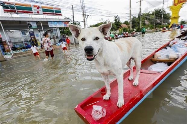 Evacuan a decenas de miles de personas por inundaciones en Tailandia hinh anh 1