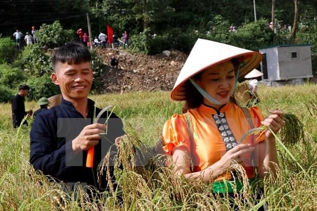 Celebran en Vietnam Festival del Com Tu Le de la etnia Thai hinh anh 1