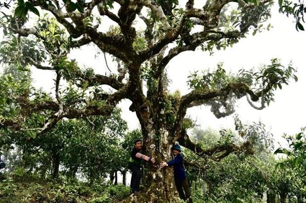 Reconoce Vietnam al te Shan Tuyet de Giang Pang como Patrimonio Nacional hinh anh 1