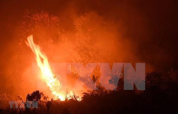 Sufren mas de 900 mil indonesios de infecciones respiratorias agudas por incendios forestales hinh anh 1