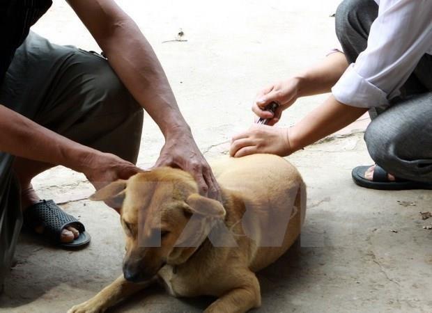 Registra Vietnam anualmente un centenar de casos mortales por la rabia hinh anh 1