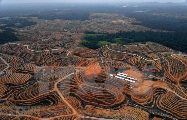 Pronostican que nueva capital de Indonesia atraera a 1,5 millones de habitantes hinh anh 1