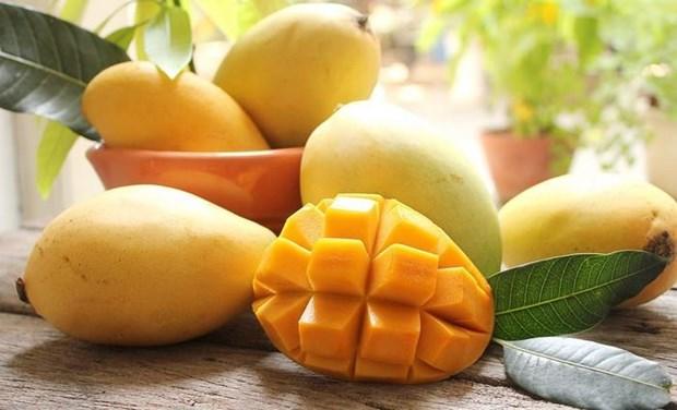 Promueven introducir el mango vietnamita de Hoa Loc en Corea del Sur hinh anh 1