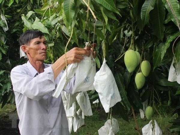 Seis frutas frescas de Vietnam conquistan mercado global hinh anh 1