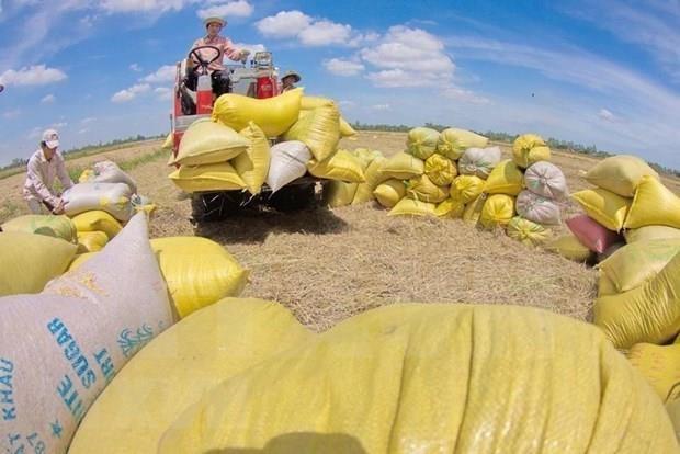 Ingresa Vietnam 2,24 mil millones de dolares por las exportaciones de arroz hinh anh 1