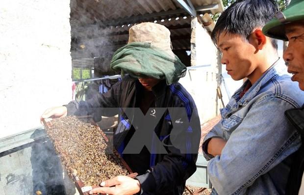 Busca provincia vietnamita impulsar cultivo de plantas medicinales con apoyo de Estados Unidos hinh anh 1