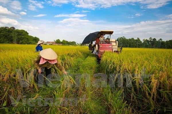 Proyectan empresas japonesas aumentar inversiones agricolas en Vietnam hinh anh 1