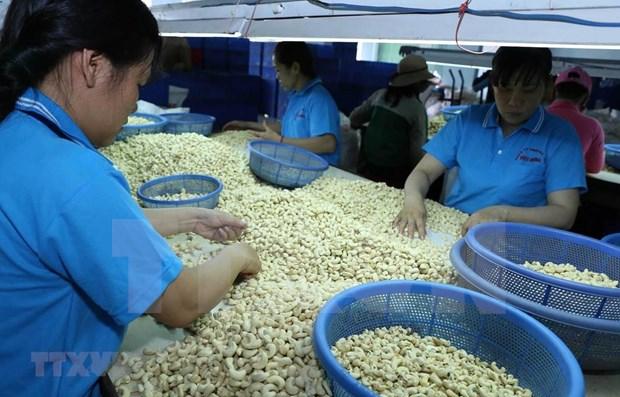 Aumenta Vietnam sus exportaciones de anacardo a China hinh anh 1