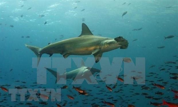 Expertos vietnamitas e internacionales debatieron analisis de datos sobre oceanos hinh anh 1