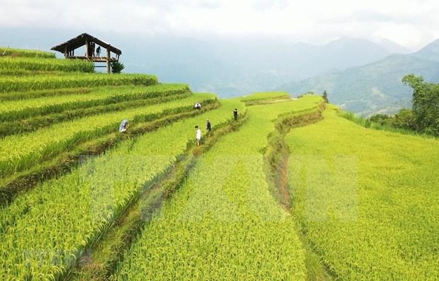 Hoang Su Phi: atractivo destino turistico en la region noroeste de Vietnam hinh anh 1