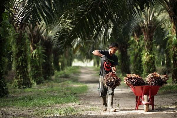 Considera la India limitar importacion de productos de Malasia hinh anh 1