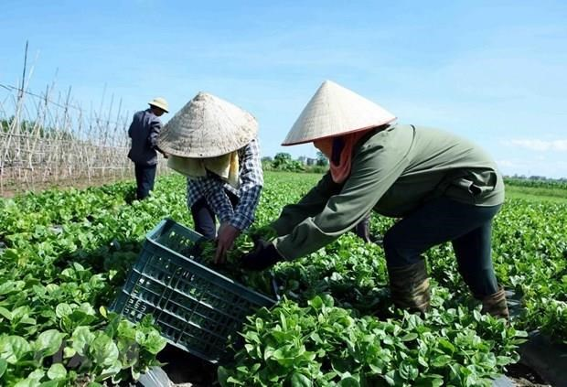 Evalua Vietnam 15 anos de economia colectiva hinh anh 1