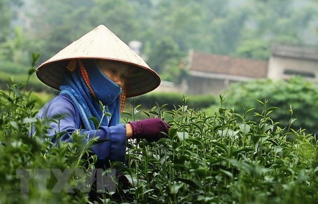 Analizan oportunidades de cooperacion entre Vietnam y China en produccion de te y cafe hinh anh 1