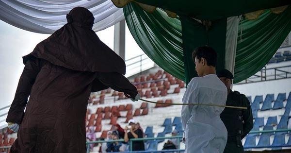 Indonesia castigara con 100 latigazos a los cazadores furtivos hinh anh 1