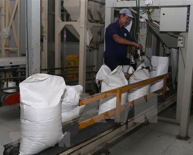 Reducira Filipinas importaciones de arroz hinh anh 1