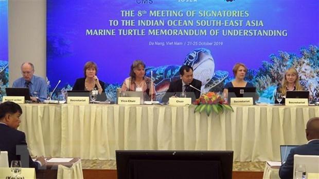 Vietnam se une a los esfuerzos mundiales para proteger a las tortugas marinas hinh anh 1