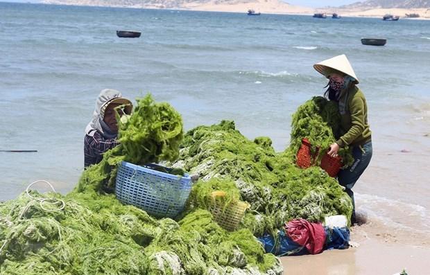 Proyectan Vietnam y Corea del Sur hacia una economia verde hinh anh 1