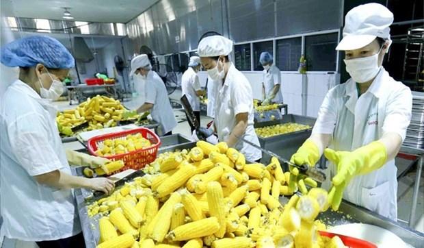 Busca Vietnam impulsar exportaciones de flores, frutas y verduras a Asia y Europa hinh anh 1