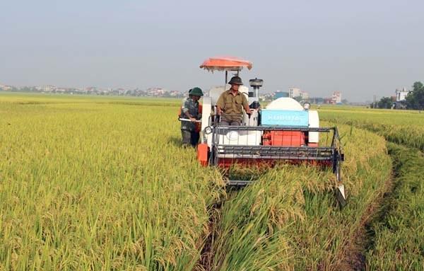 Provincia vietnamita de Vinh Phuc impulsa desarrollo de industria en zonas rurales hinh anh 1