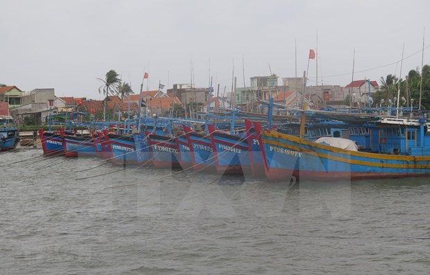 Enfrentaran provincias centrovietnamitas la quinta tormenta de la temporada hinh anh 1