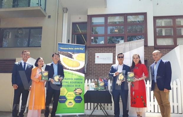 Promociona Vietnam su durian en Australia con muestras itinerantes hinh anh 1