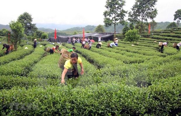Analizan diputados de Vietnam plan de desarrollo de etnias minoritarias hinh anh 1