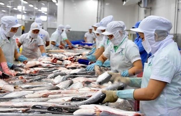 Reconoce EE.UU. equivalencia del sistema de control de higiene de bagres vietnamitas hinh anh 1