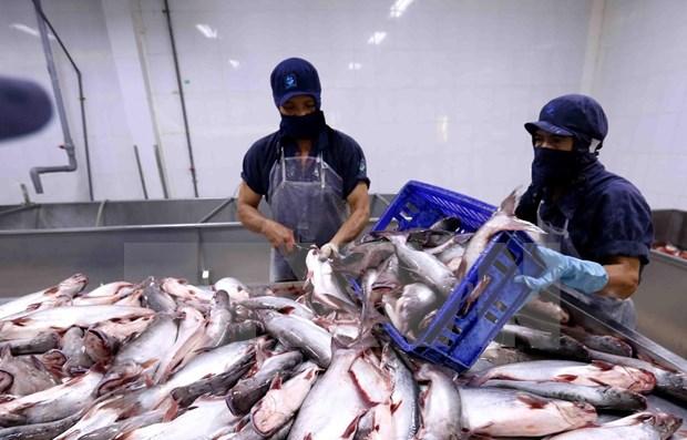 Aprueba Estados Unidos las importaciones de pescados sin escamas de Vietnam hinh anh 1