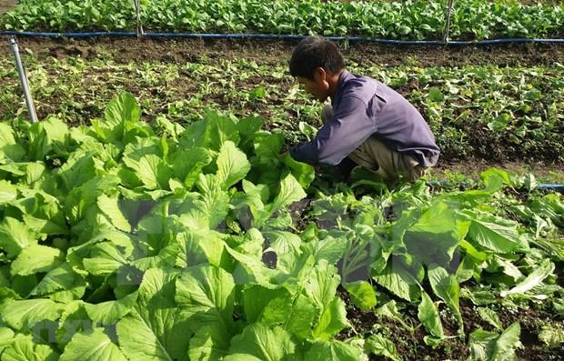 Impulsan Vietnam y Paises Bajos cooperacion en agricultura hinh anh 1