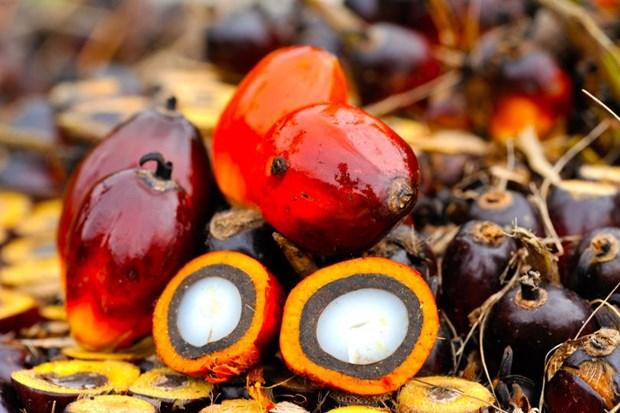 Reanuda la India importaciones de aceite de palma de Malasia hinh anh 1