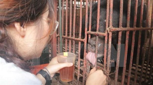Mejoran en Vietnam conciencia publica sobre la proteccion de los osos hinh anh 1