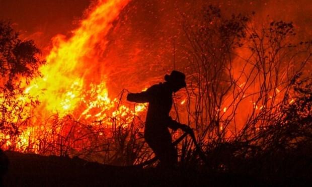 Impone Indonesia pago de compensacion multimillonaria a culpables de incendios forestales hinh anh 1