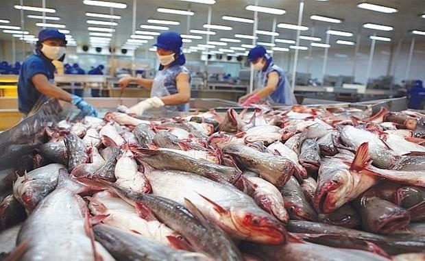 Suben las exportaciones del pescado Tra vietnamita a Malasia hinh anh 1