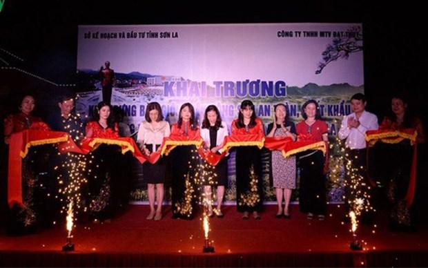 Inauguran zona de productos agricolas seguros en provincia vietnamita de Son La hinh anh 1