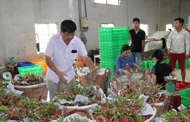 Provincia vietnamita espera incrementar exportaciones agricolas a China hinh anh 1