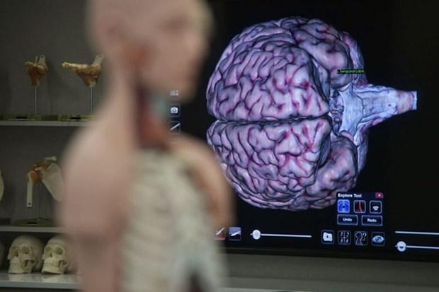 Lanza Singapur su primer banco de cerebros hinh anh 1