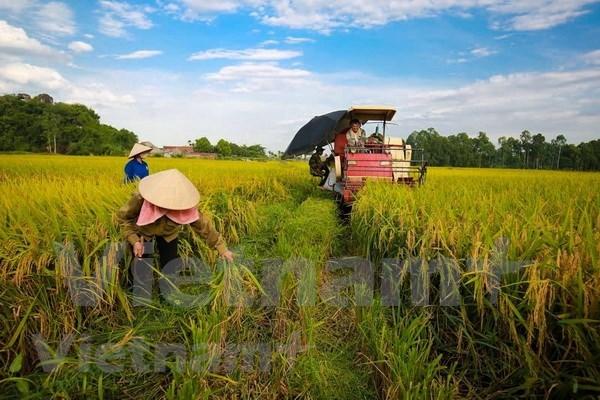 Goza sector agricola vietnamita de un superavit comercial de 8,8 mil millones de dolares hinh anh 1