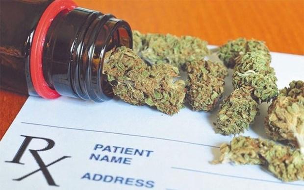 Incautan en Vietnam 5,8 kilogramos de marihuana transportada desde Camboya hinh anh 1