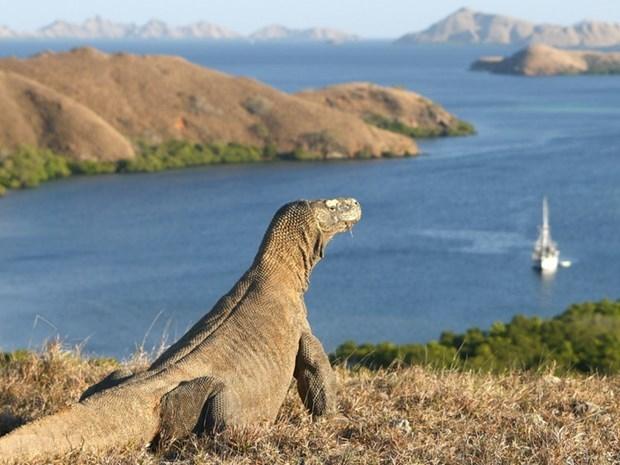 Promueve Indonesia el turismo hacia la Isla de Komodo hinh anh 1