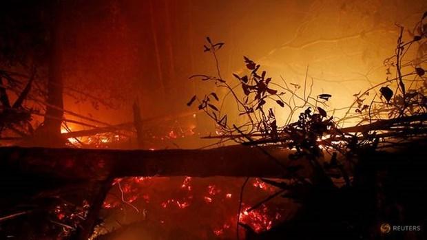 Afectaron los incendios forestales en Indonesia mas de 1,6 millones de hectareas hinh anh 1