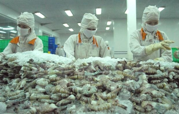 Avizora Vietnam mejores perspectivas para exportaciones de camaron en 2020 hinh anh 1