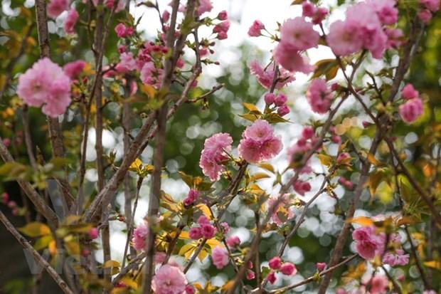 Celebraran Festival de Flores Sa Dec 2020 hinh anh 1