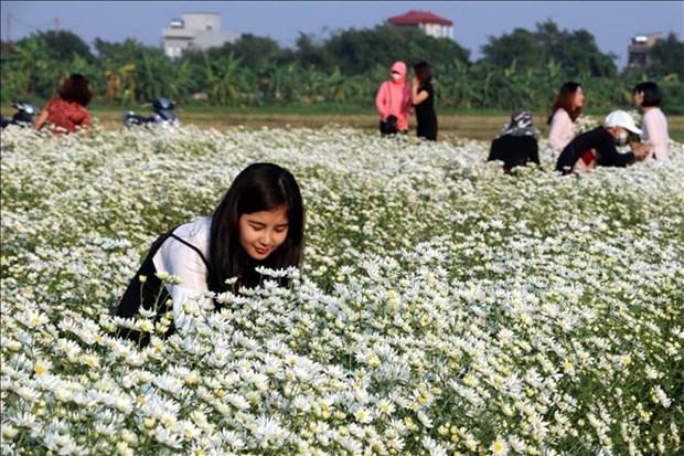 Atractivo jardin de margaritas en provincia vietnamita de Nam Dinh hinh anh 1