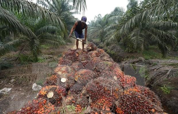 Indonesia presenta demanda al OMC contra la UE por su politica sobre aceite de palma hinh anh 1