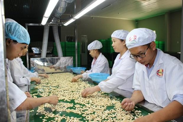 En alza las exportaciones del anacardo vietnamita a China hinh anh 1