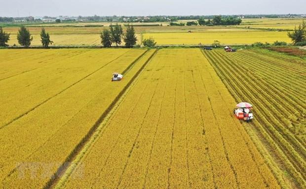 Vietnam en cuarto lugar del Sudeste Asiatico en clasificacion de seguridad alimentaria hinh anh 1