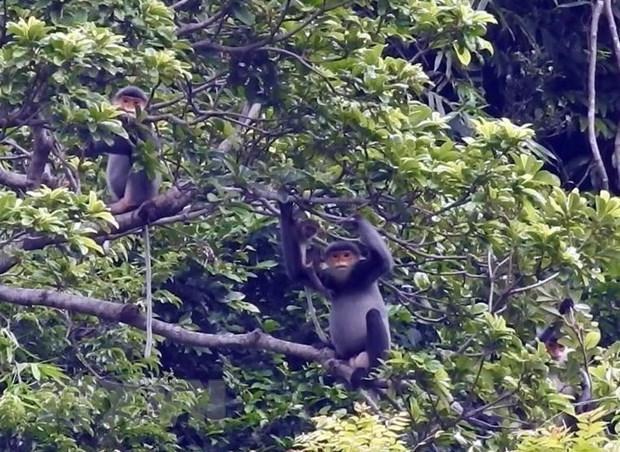 Lanzan programa juvenil sobre proteccion de primates en Vietnam hinh anh 1