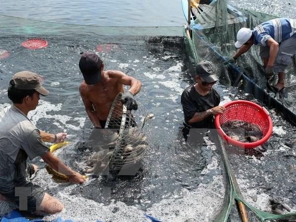 Provincia vietnamita de Dak Lak emite plan de proteccion sanitaria de especies acuicolas hinh anh 1